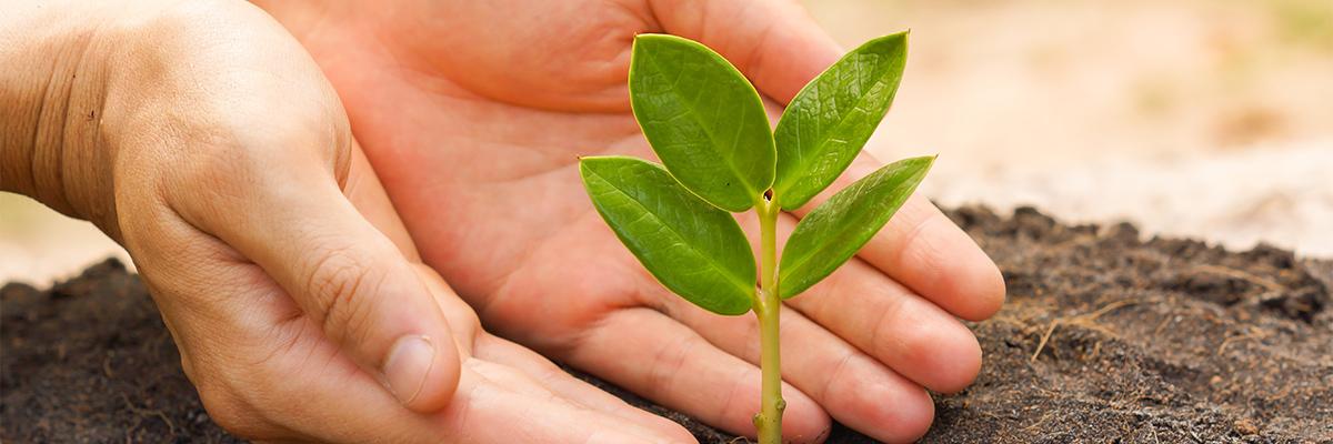 corporate-responsibility-crop